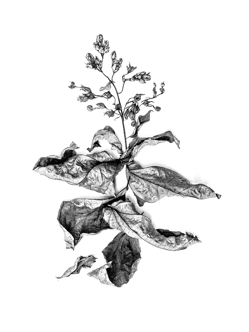 Botânica . Plantas